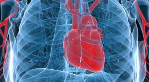 seksi redukton rrezikun per semundjet e zemres