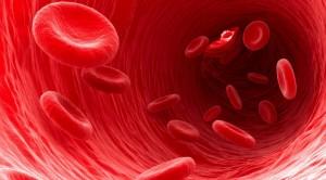 gjaku
